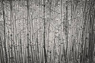 Photograph - Aspen Illusion by Amanda Smith