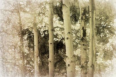 Photograph - Aspen In Sepia by Ann Powell