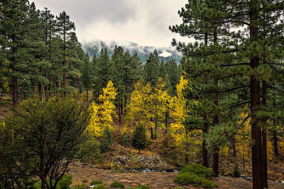 Photograph - Aspen In The Forest by Maria Coulson