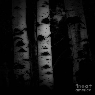 Photograph - Aspen In Winter Bw by Tim Richards