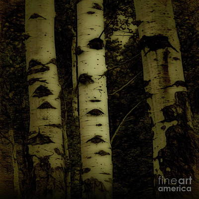 Photograph - Aspen In Winter by Tim Richards