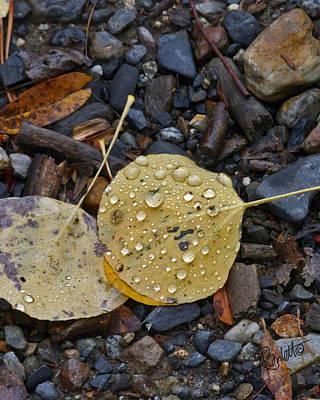 Photograph - Aspen Leaf by Ann Ranlett