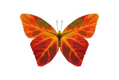 Digital Art - Aspen Leaf Butterfly 2 by Agustin Goba