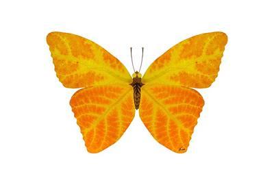 Digital Art - Aspen Leaf Butterfly 3 by Agustin Goba