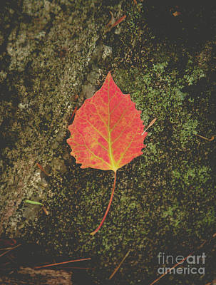 Photograph - Aspen Leaf by Cheryl Baxter