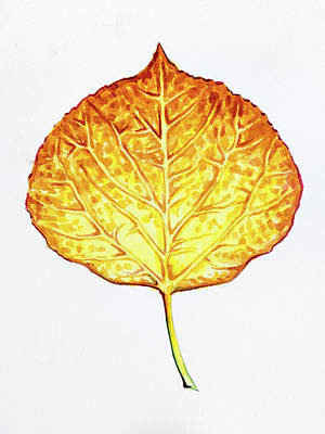 Painting - Aspen Leaf - Orange And Yellow by Aaron Spong