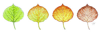 Painting - Aspen Leaf Progression by Aaron Spong