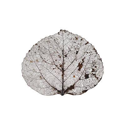 Digital Art - Aspen Leaf Skeleton 10 by Agustin Goba