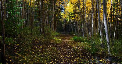 Photograph - Aspen Leaf Trail by Flying Z Photography by Zayne Diamond