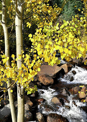 Photograph - Aspen Leaves by Nava Thompson