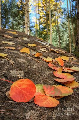 Photograph - Aspen Leaves On Lichen by Marianne Jensen