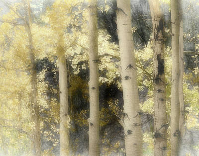 Photograph - Aspen Light And Shadow by Ann Powell