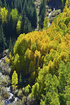 Photograph - Aspen Lined Creek Beneath Highway 550 by Ray Mathis