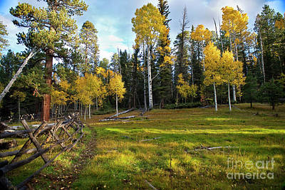 Photograph - Aspen Meadow by David Arment