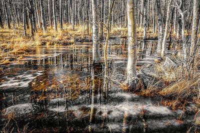 Photograph - Aspen Meadow by Steph Gabler