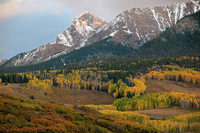 Photograph - Aspen Meadows by Steve Stuller