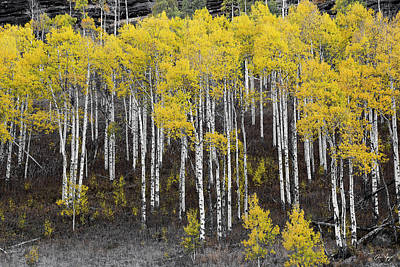 Photograph - Aspen Monochrome by Aaron Spong