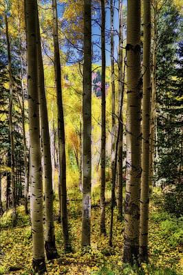Art Print featuring the photograph Aspen Mood - Autumn - Colorful Colorado by Jason Politte