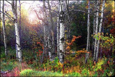 Photograph - Aspen Morning by Wayne King