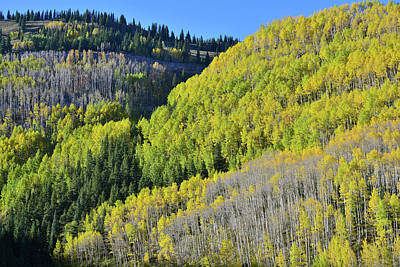 Photograph - Aspen Mountainside Above Million Dollar Highway by Ray Mathis