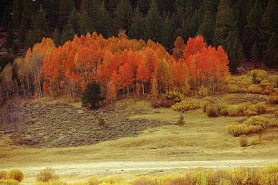 Photograph - Aspen, October, Hope Valley by Michael Courtney