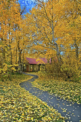 Photograph - Aspen Path Home by Lynn Bauer