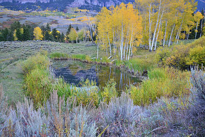 Photograph - Aspen Pond In Big Cimarron by Ray Mathis