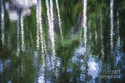 Photograph - Aspen Reflection Summer by The Forests Edge Photography - Diane Sandoval