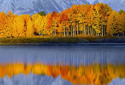 Aspen Reflection Art Print