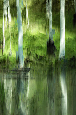 Photograph - Aspen Reflections by Deborah Hughes