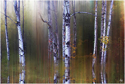 Photograph - Aspen Reflections by Wayne King