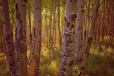 Photograph - Aspen  by Richard Keer