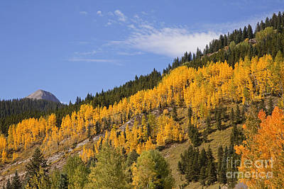 Photograph - Aspen Ridge San Juan Mountains by John Stephens