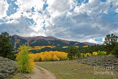 Photograph - Aspen Road by David Arment