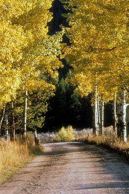 Photograph - Aspen Road by Gerard Fritz
