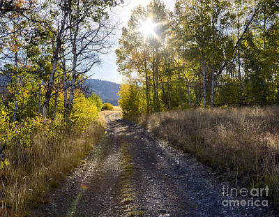 Photograph - Aspen Road by Idaho Scenic Images Linda Lantzy