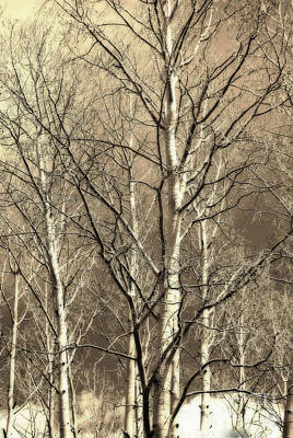 Photograph - Aspen Sky White Mountains Arizona by Donna Greene