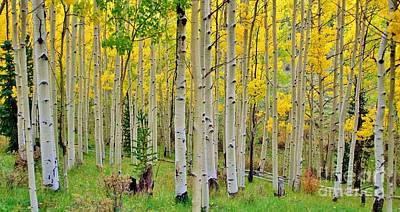 Aspen Slope Art Print by Ellen Heaverlo