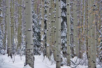 Photograph - Aspen Snow by Matt Helm