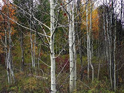 Photograph - Aspen Stand by Joe Duket
