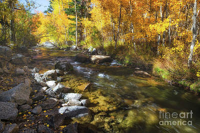 Photograph - Aspen Stream by Anthony Bonafede