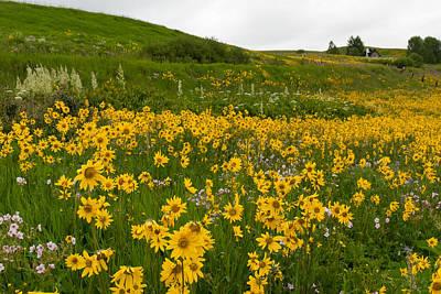 Photograph - Aspen Sunflower Meadow Landscape by Cascade Colors