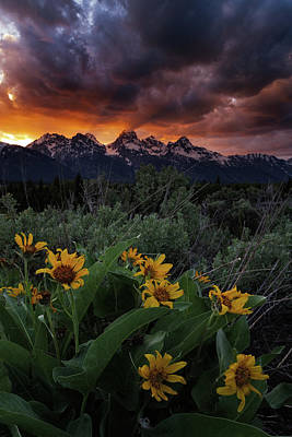 Photograph - Aspen Sunflower Sunset In The Tetons by Mike Berenson