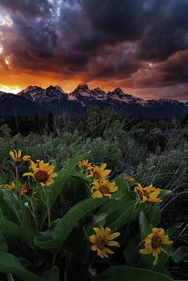 Photograph - Aspen Sunflower Sunset In The Tetons by Mike Berenson