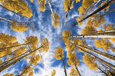 Photograph - Aspen Tops Towards The Sky  by Saija Lehtonen