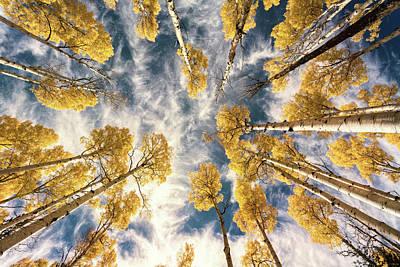 Photograph - Aspen Tops Towards The Sky Vintage  by Saija Lehtonen