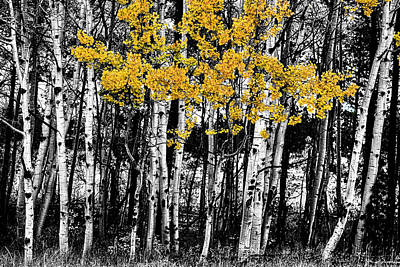 Aspen Touch Of Orange Art Print by James BO Insogna