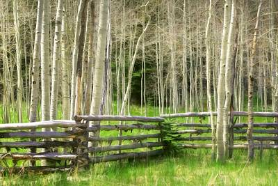 Photograph - Aspen Tranquility by Donna Kennedy