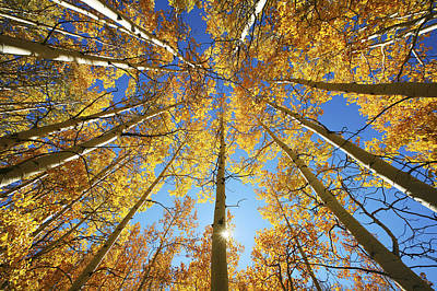 Sunrays Photograph - Aspen Tree Canopy 2 by Ron Dahlquist - Printscapes