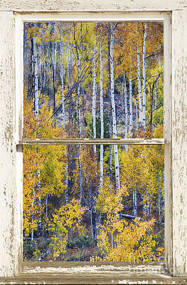 Aspen Tree Magic Cottonwood Pass White Farm House Window Art Art Print